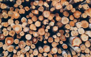 Cejus servicio Forestal Covaleda Ayuntamiento